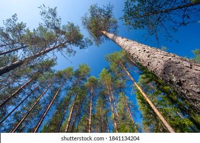 taiga unberührte Natur von Finland-Skandinavien Europa Finland