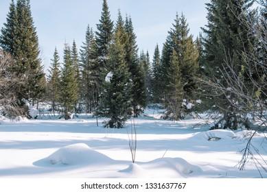 Winter Taiga Images, Stock Photos & Vectors   Shutterstock