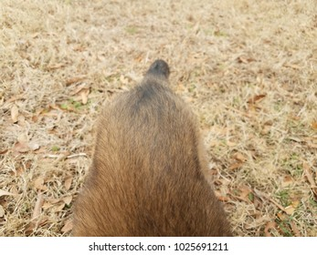 tail and back of brown dog on the grass