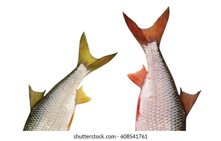 tail of a fish on white