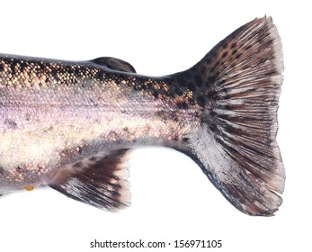Tail of fish trout