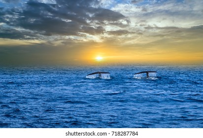 Tail humpback whale fluke up dive in Sunset over sea landscape