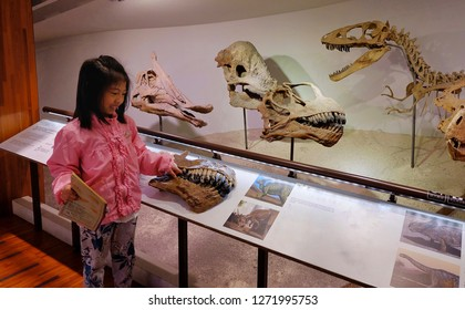 Taipei / Taiwan - 12/10/2018: An Asian girl with a pink sweater having fun at the National Taiwan museum's dinosaur exhibit