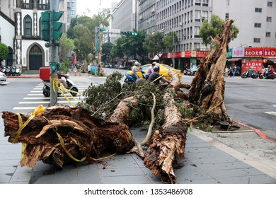 Taipei, Taiwan - August 2016: A fallen tree in the centre of Taipei after a strong typhoon.