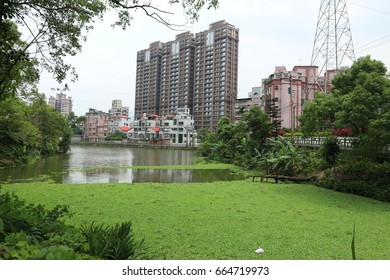 Taipei  , Taiwan - May-11 ,2017 : duckweed floating  on water and Background building