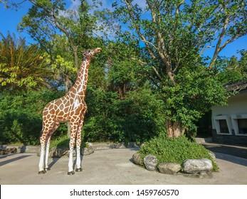 Taipei, Taiwan - October 24, 2016 : The Taipei Zoo or Muzha Zoo is a public zoological garden in Wenshan District, It is the most famous zoological garden in Taiwan.