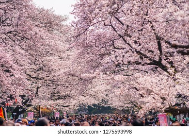 """TAITO, TOKYO / JAPAN - APRIL 5 2017 : Scenery of """"Ueno Park"""" with cherry blossoms in full bloom. The road inside the park is very crowded with people visiting to see cherry blossoms."""