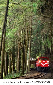 Taiwan Alishan travel by train in the green forest.