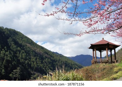Taiwan, February 20 of 2014 cherry blossom in a mountain with arbor,
