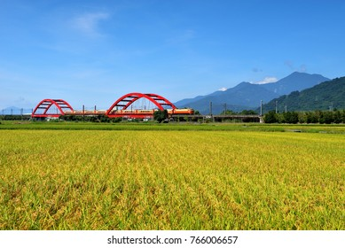 Taiwan, Hualien, yellow rice fields, red arch bridge and moving train, blue sky and rolling mountains are a beautiful picture