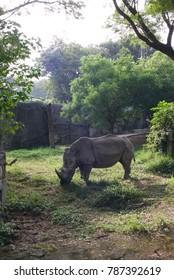 Taiwanese rhinoceros of Shou Shan in Taiwan