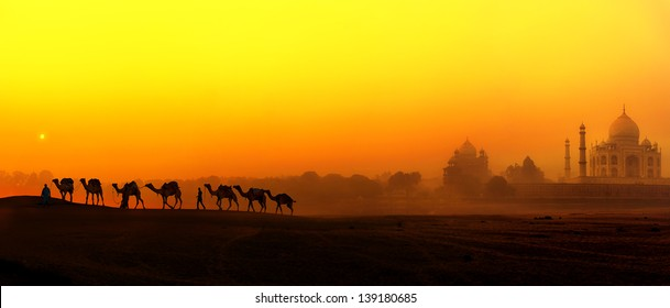 Taj Mahal Sunset view in India. Panoramic landscape with camels silhouettes and Tajmahal indian palace