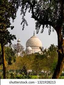 Taj Mahal surrounded by trees from the garden in Agra, India1