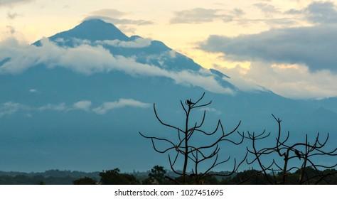 Tajumulco Volcano in Guatemala with bird silhouetted in a tree