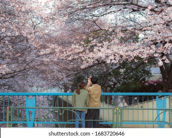 Takaido, Tokyo / Japan - March 26th 2020: Despite the Tokyo governor asked people to stay at home du to corona virus epidemia, japanese people still enjoy the cherry blossoms oustide.