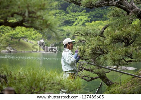 TAKAMATSU, JAPAN - MAY 8: A gardener prunes an ornamental pine in Ritsurin gardens, Takamatsu, Japan on May 8, 2012. Ritsurin is a landscape garden built by feudal lords during the early Edo Period.