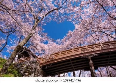 Takato Castle Cherry blossom,d (Sakura), Ina, Nagano Prefecture, Japan
