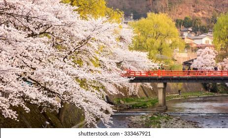 Takayama City, Branches of a cherry blossom tree at Sakura Season Hanami festival in Spring and Nakabashi Bridge (Traditional japanese red bridge) Takayama Old Town Landmark, Japan