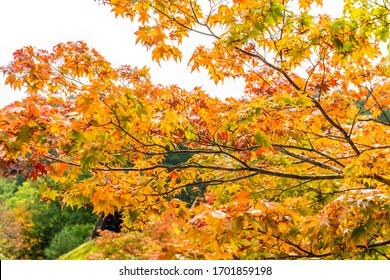 Takayama, Japan: October 27, 2019: Hida Folk Village (Hida No sato) with beautiful autumn foliage and traditionalhouses