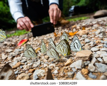 take a photo butterflies by smart phone