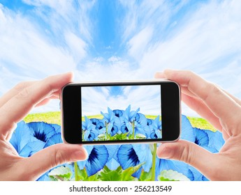 take a photo violet flowers on a background of blue sky