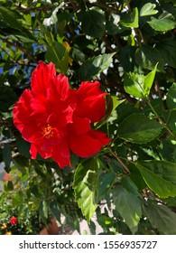 Taken at the Botanical Gardens, Bronx, NY