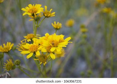 Taken in a field by Mount Rubidoux in Riverside