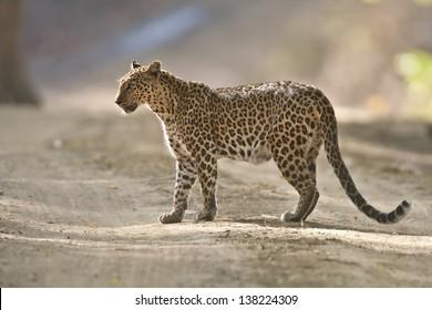 Taken at Kanha Tiger Reserve