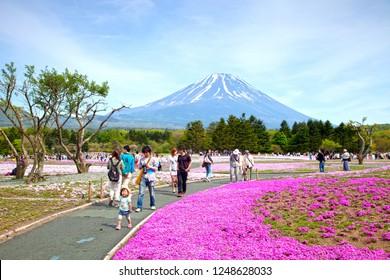 Taken on 11th May 2015 in Motosu, Fujikawaguchiko, , Yamanashi, Japan. The Shibazakura Festival in Motosu, Japan where beautiful pink phlox moss is grown and with Mount Fuji in the background.