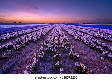 Taken waaay after sunset a blue hour shot of the awesome flowerfields of Noordwijkerhout, the Netherlands.