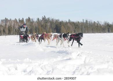 taken at warren ont dog sled races