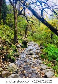 taken while trekking to kheerganga kasol, himachal pradhesh