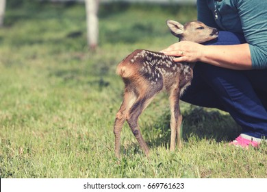 Taking care of a baby deer, wildlife rescue