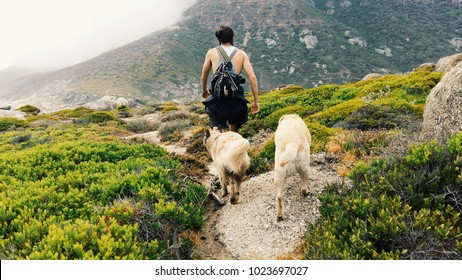 Taking the dogs for a walk