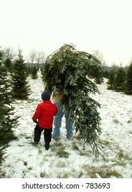 taking home the Christmas tree