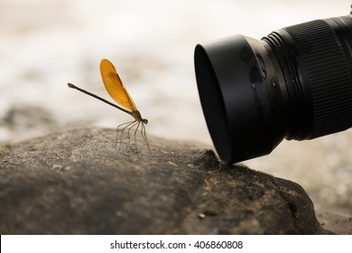 taking macro photography dragonfly on stone