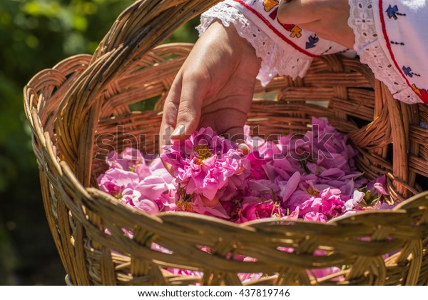 ピンクのバラの入ったバスケットから1本の花を取る。