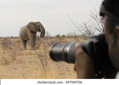 Photo d'un éléphant dans le parc national d'Etosha en Namibie