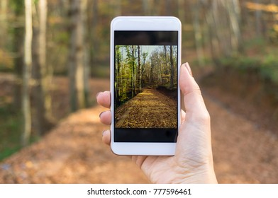Taking photo of nature with smart phone.