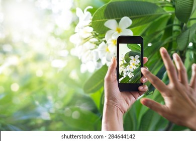 Taking pictures white flower with mobile smart phone in the nature background