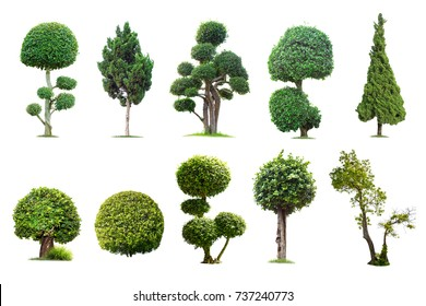 Tako trees bending.Isolated tree on white background , The collection of trees.