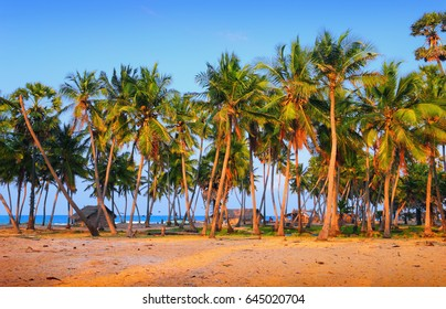 Talaimannar village, Mannar island, Sri Lanka, South Asia. Beautiful scenic view, fishing reed hut, Indian Ocean, coconut palm trees in light of setting sun against the background of bright blue sky