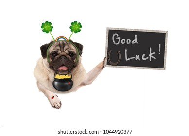 Talisman pug puppy dog, with shamrock clover, golden coins, lady bug and horse shoe for good luck and success, isolated on white background
