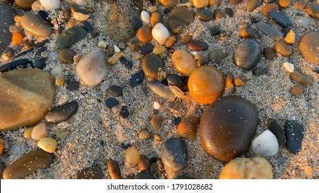 Talitrus saltator on the pebble shore of Esposende, Portugal. Talitrus saltator, a species of sand hopper, is a common amphipod crustacean of sandy coasts around Europe.