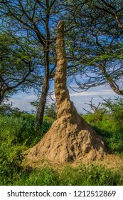Tall Ant hill
