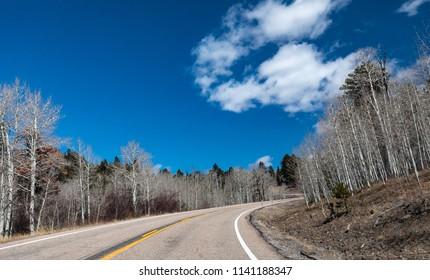 Tall Barren Silver Trees Along a Curvy Road in Southwest Utah