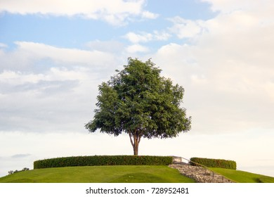 A tall big tree is standing alone on top of the mountain with the cloudy blue sky background. The hope of life on the day of dawn.
