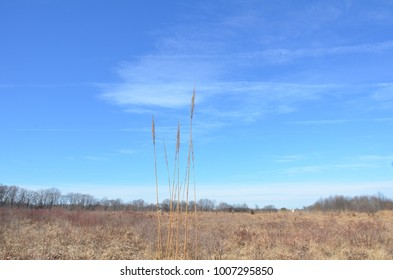 tall brown grasses and blue sky