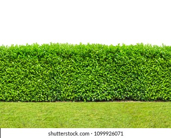 Tall  bush hedge with grass isolated on white. Seamless endless pattern.