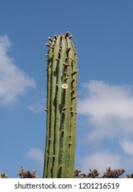 Tall cactus with a flower